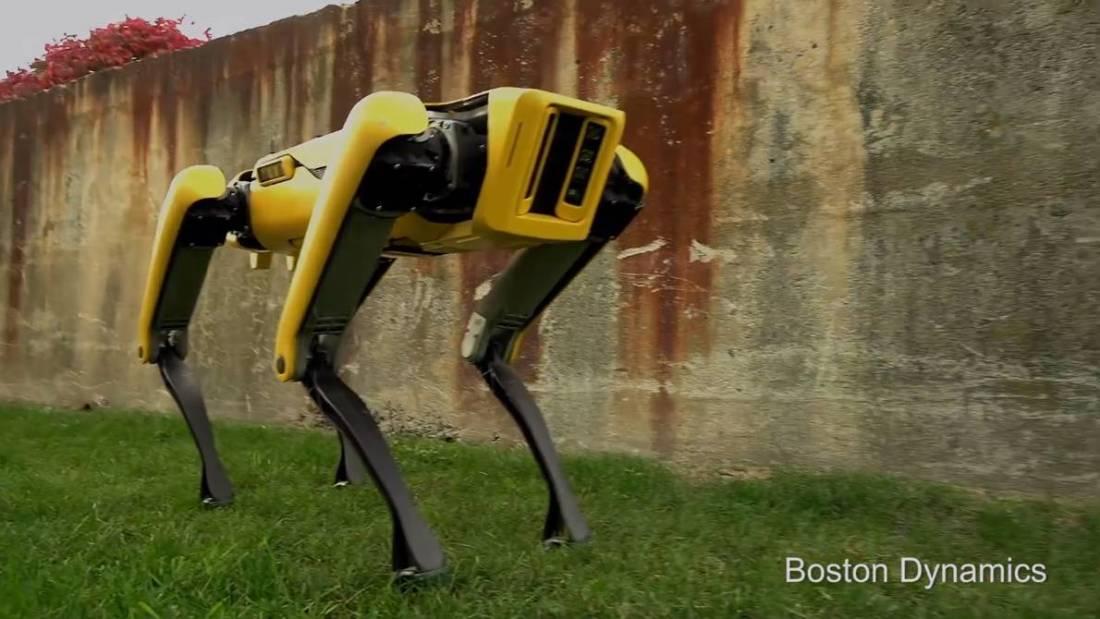 Perro robot boston