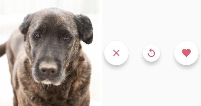 get pet perros en adopción