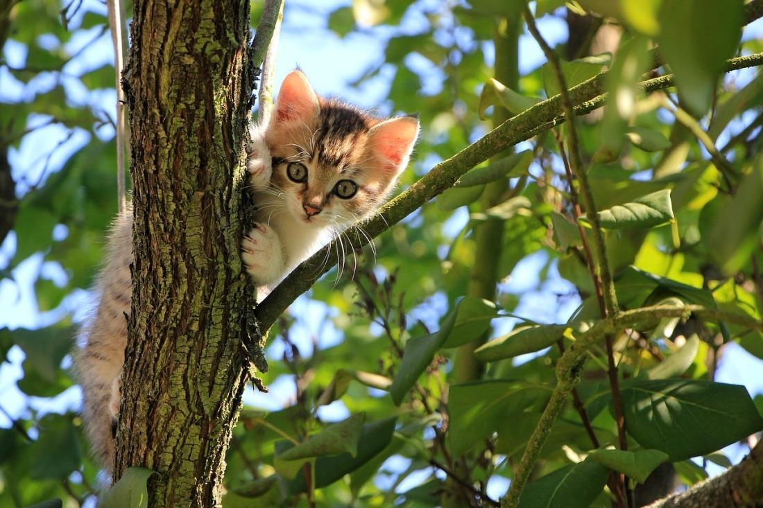 cat-1647775_1280