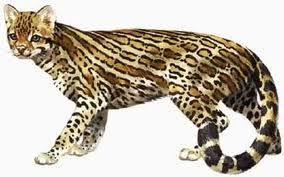 felinos miácidos del Eoceno